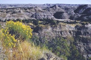 Theodore_Roosevelt_National_Park
