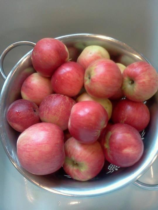 Apples 8-25-2013