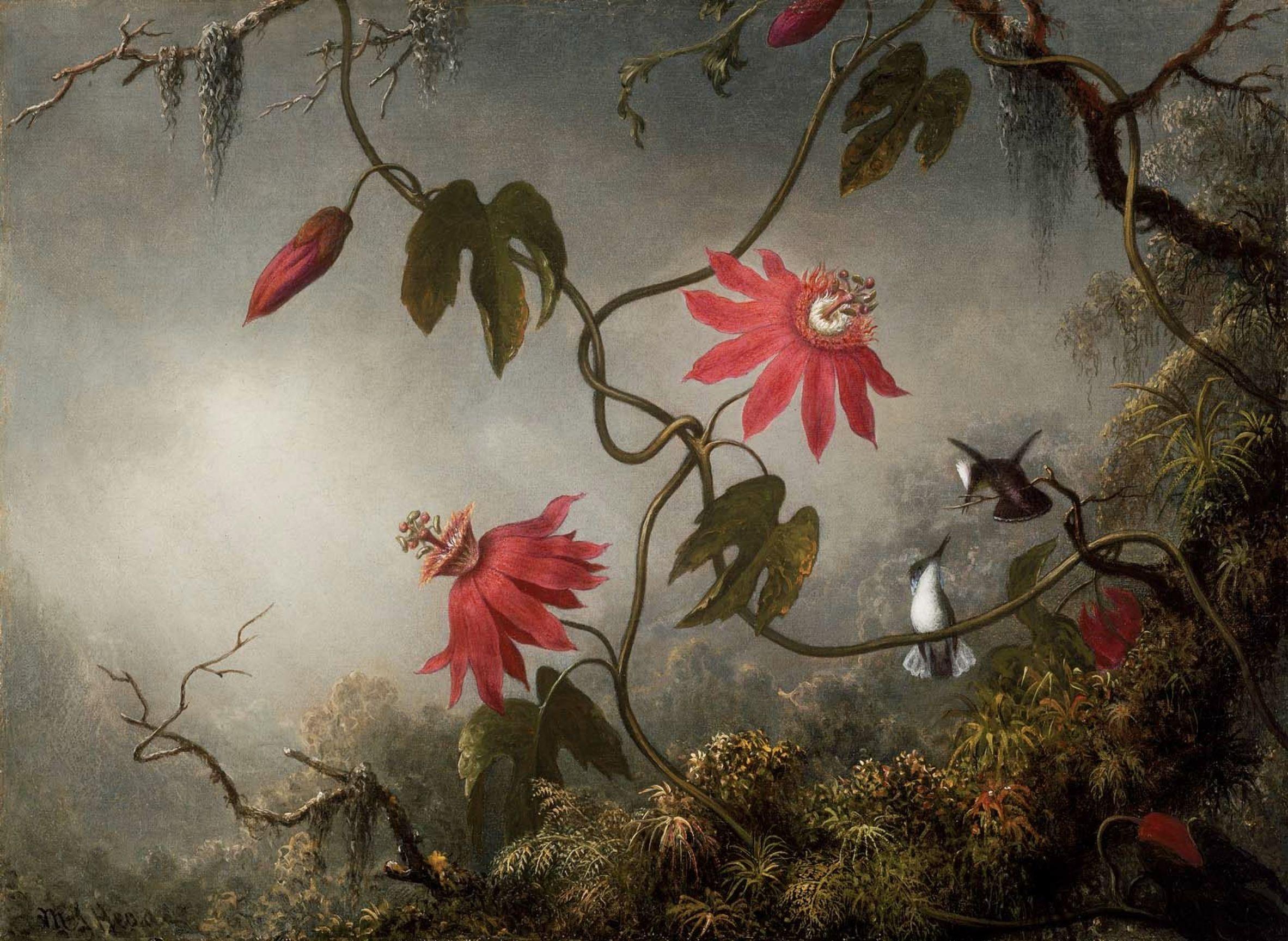 MJ_Heade_Passion_Flowers_and_Hummingbirds